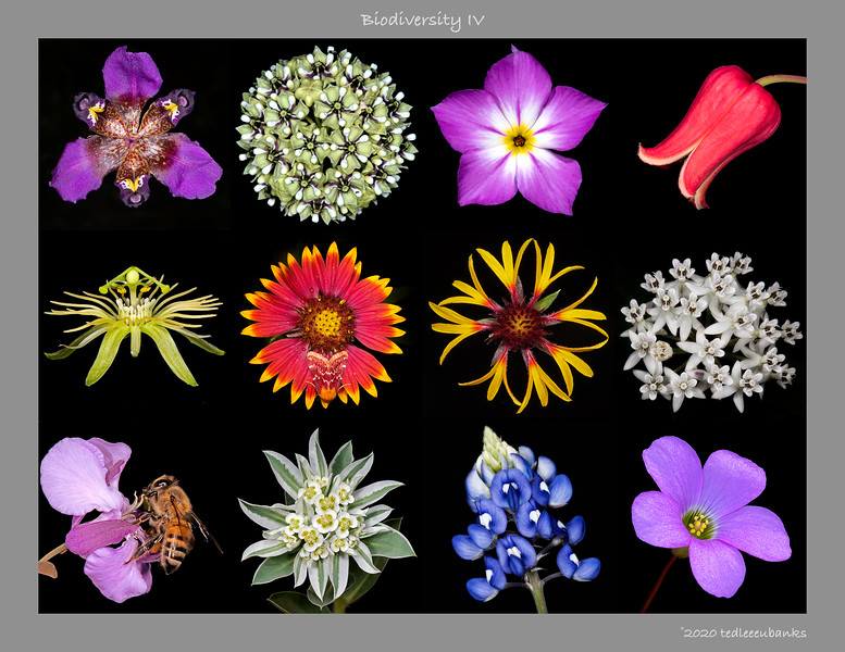 Biodiversity IV
