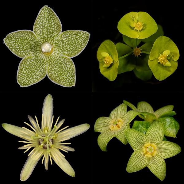 Texas Botanicals Collage - Green