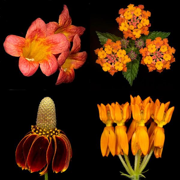 Texas Botanicals Collage - Orange