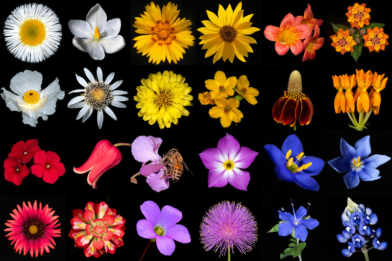 Texas Botanicals Wildflower Spectrum