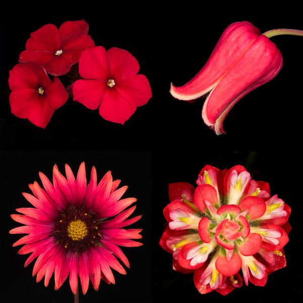Texas Botanicals Collage - Red
