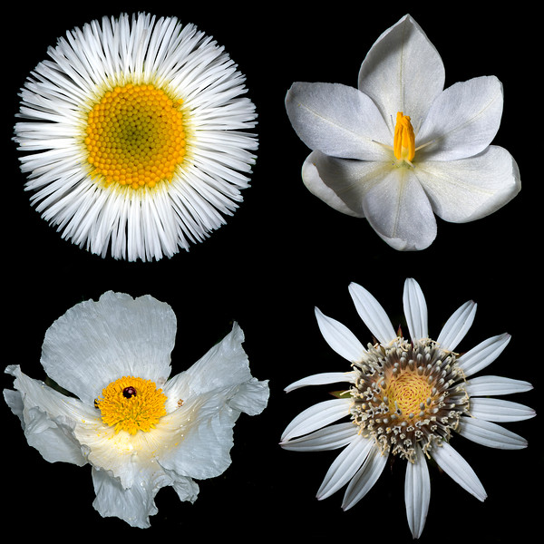 Texas Botanicals Collage - White