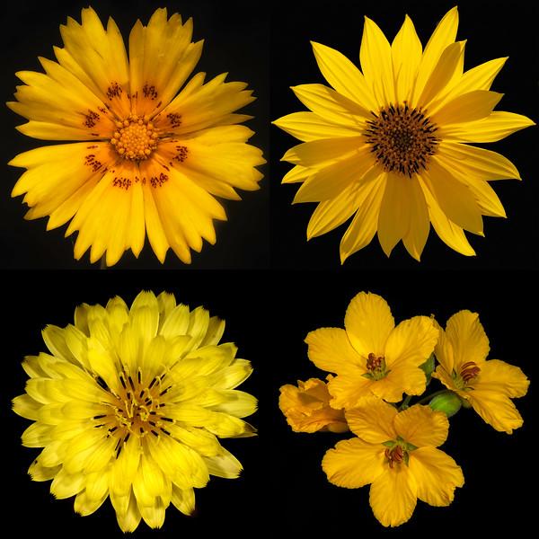 Texas Botanicals Collage - Yellow