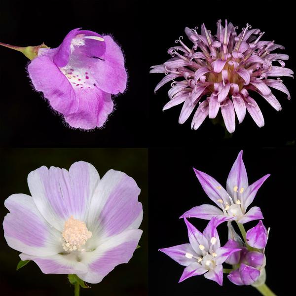 Texas Botanicals Collage - Violet