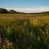 Heart of Texas Wildflowers