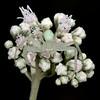 Late boneset with flower crab spider