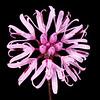 Rosy palafox