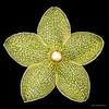 Pearl milkweed vine