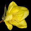 Fluttermill