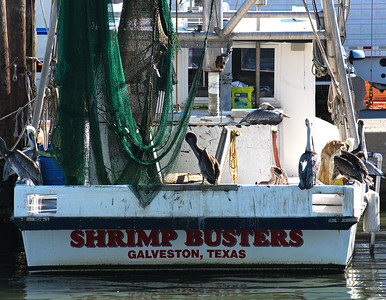 Galveston_Super-Moon_Shrimp-boart&Pelicans_D75_1019