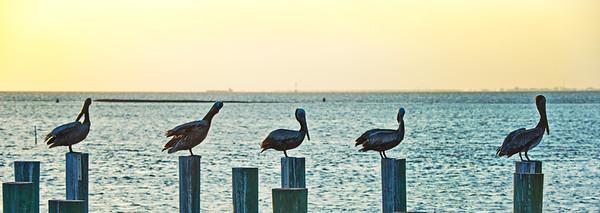 Galveston Bay from the Texas City Dike