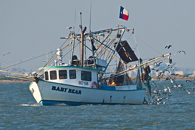 09292017_Tx_City_Dike_Baby_Bear_Shrimper_TX_Flag_500_2395