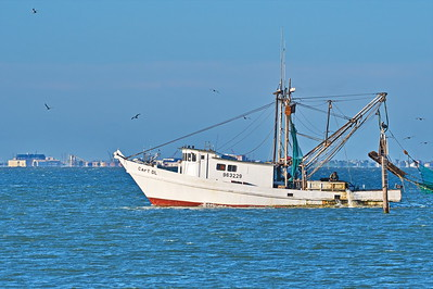 Capt DL Shrimper