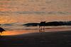 (6:58 AM)  Gull on sunlit beach at sunrise.