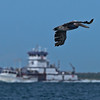 Brown Pelican in flight on the Galveston Bay side of the Texas City dike with boats and barge in background, also the Bolivar Coastline.
