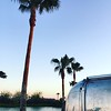 Palm Tree and 1970 Airstream by the pond