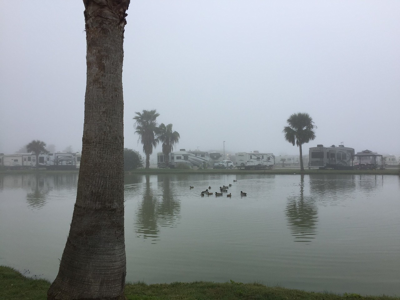 Campground Pond of a Foggy Morning