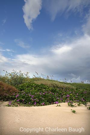 Sand Dunes & Blue Sky MG9911-9302007