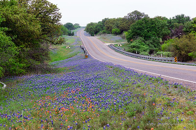Bluebonnets North of Llano, Texas