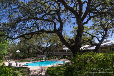 Kerrville, TX Oak Tree at hotel pool