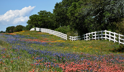 Texas Hill Country & Beyond