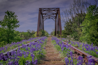 Abandoned Trestle and Bluebonnets