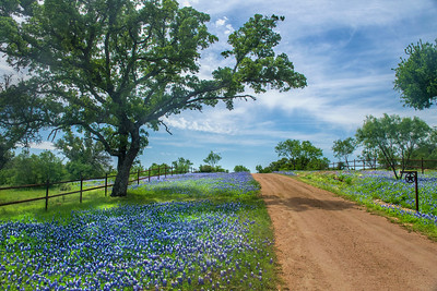 Bluebonnets and Country Road