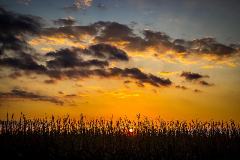 Sunset on Cornfield.