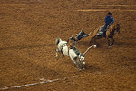 White Bucking Bronco -Houston Livestock and Rodeo 2012
