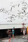 Jumping High To Feed The Galveston Ferry Gulls