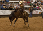 Bronco Needing To Be Shod -Pasadena Rodeo 2012