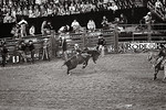 Bronco Ridin' -Houston Livestock and Rodeo Show 2012