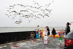 Watching The Galveston Ferry Gulls