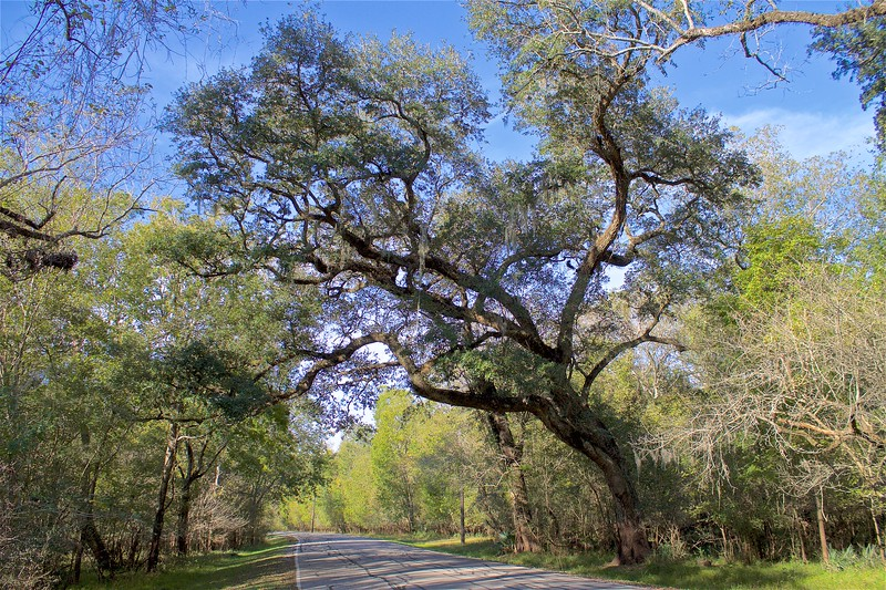 Brazos Bend State Park Texas