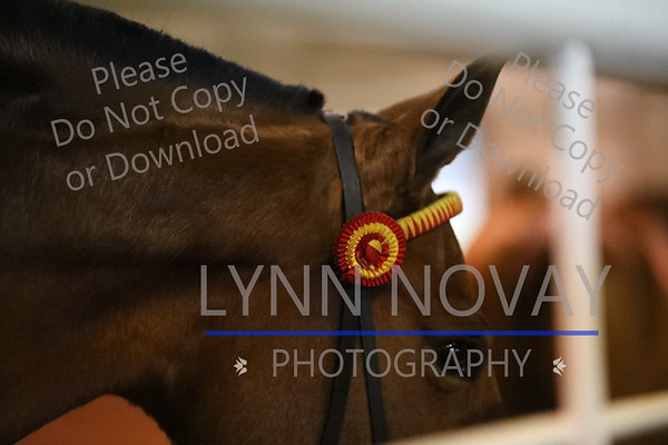 Andalusian ~ Texas Breed Show ~ 11/18/2016