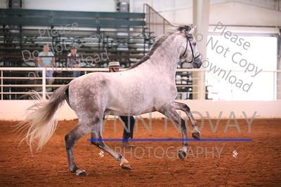 IALHA ~ International Andalusian/Lusitano Horse Association