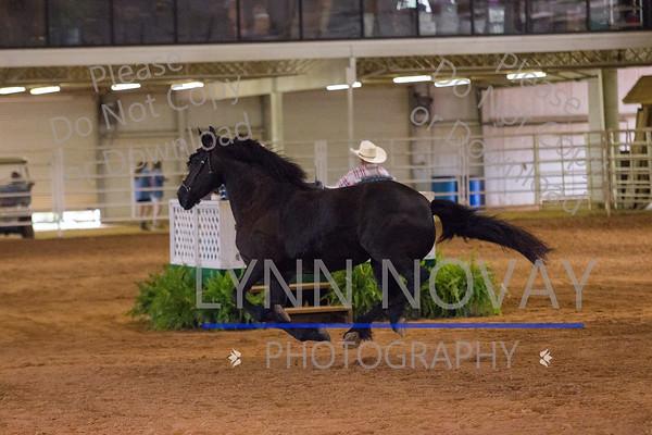 Friesian ~ Texas Breed Horse Show ~ 8-28-2016