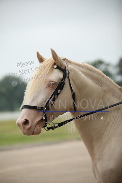 RMHA ~ Rocky Mountain Horse Association ~ Texas