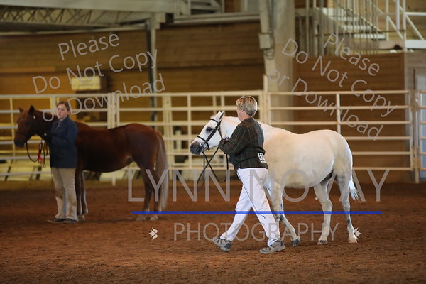 WPCSA ~ Welsh ~ Texas Rose Breed Show ~  11/20/2016