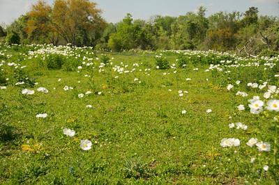 San Felipe de Austin  Spring Pasture