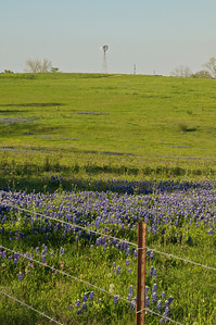 Windmill, Barbed Wire, and Bluebonnets