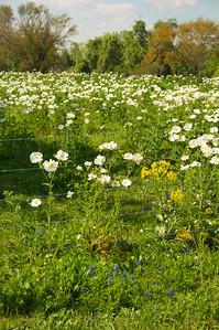 San Felipe de Austin  Spring