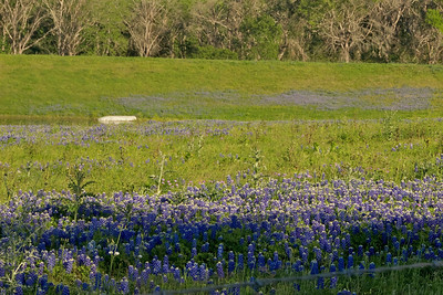 Bluebonnets and the boat