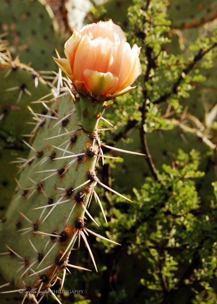 Prickly Beauty #2