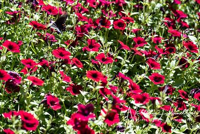 Mercer Botanical Gardens