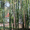 Bamboo Landscape<br /> Zilker Gardens, Austin, TX