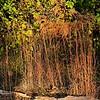 Sunbathed Grasses<br /> Hodges Garden State Park, LA