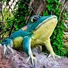 Garden Frog<br /> New Braunfels, TX