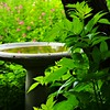 Shady Birdbath<br /> The Lindheimer House is located in the city of New Braunfels, county of Comal, in the U.S. state of Texas.