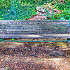 The Wooden Bench<br /> Zilker Gardens, Austin, TX